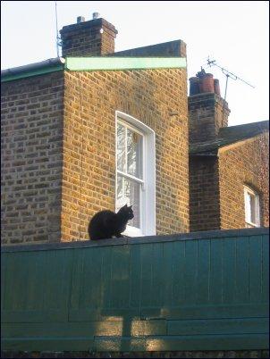Photo: Black Cat