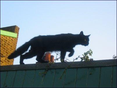 Black Cat Walk