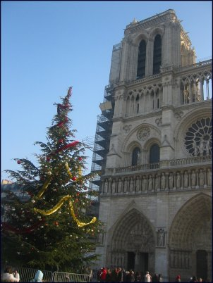 Photo: Notre Dame tree